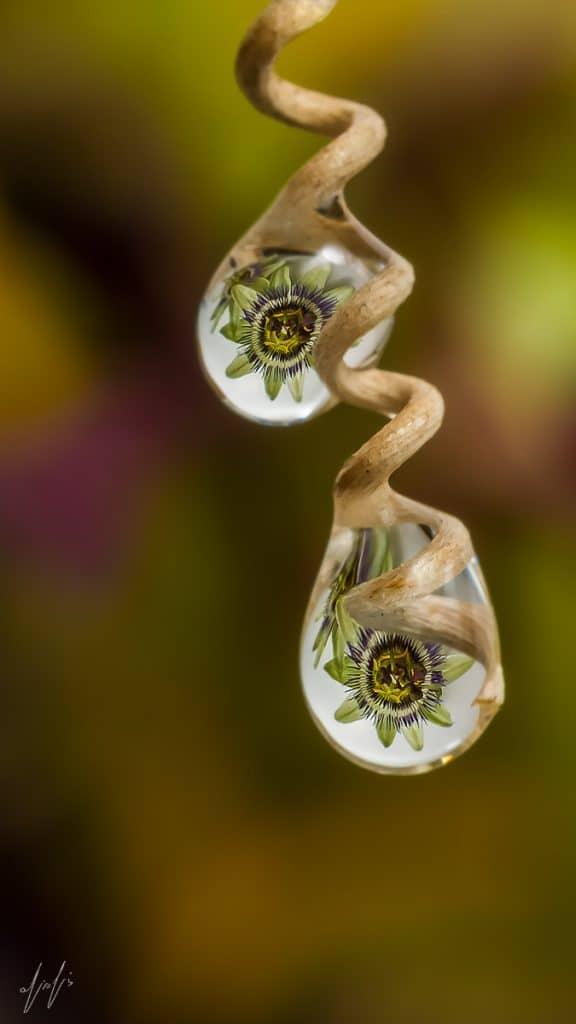 Flowers reflection in Rain drops